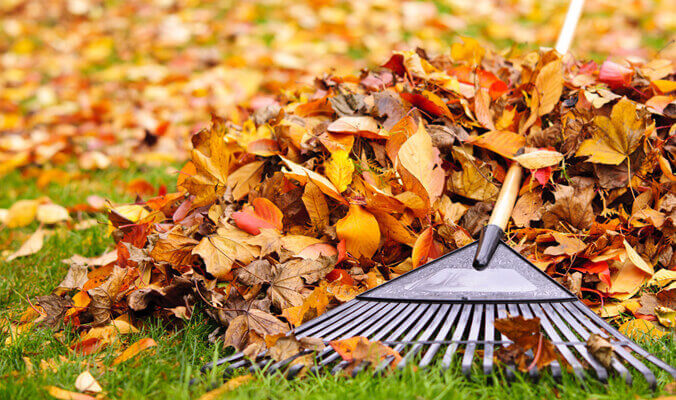 Yard Clean up service in North Denver Metro